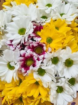 Mooie verschillende chrysantenbloemen. natuur autumn floral muur. chrysanten bloeien seizoen. veel chrysanthemum bloemen groeien in potten te koop in de bloemist
