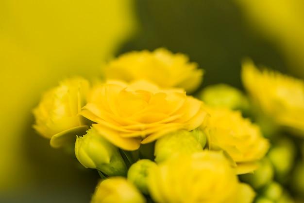 Mooie verse gele bloesems