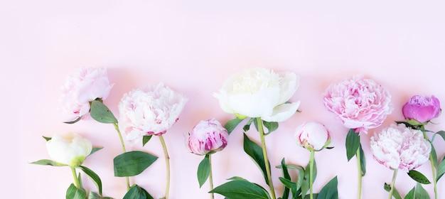 Mooie verse roze en witte pioenroos bloemen op roze tafel