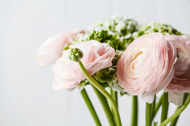 Mooie verse roze ranunculus bloemen, witte achtergrond.