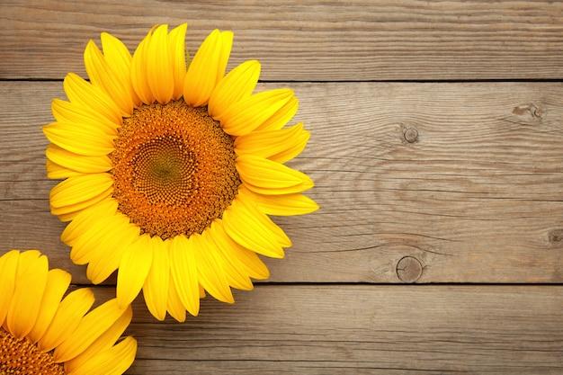 Mooie verse zonnebloemen op grijze achtergrond. plat lag, bovenaanzicht, kopieer ruimte. herfst of zomer concept, oogsttijd, landbouw. zonnebloem natuurlijke achtergrond.