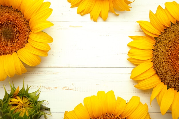 Mooie verse zonnebloemen op witte achtergrond. plat lag, bovenaanzicht, kopieer ruimte. herfst of zomer concept, oogsttijd, landbouw. zonnebloem natuurlijke achtergrond.