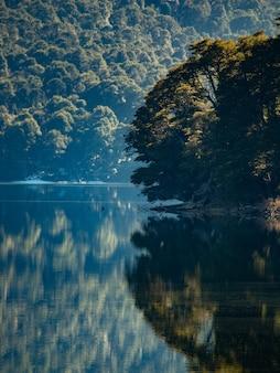 Mooie verticale opname van een weerspiegeling van een bos in een meer