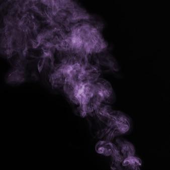 Mooie violette rook op zwarte achtergrond