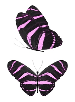 Mooie violette tropische vlinders geïsoleerd op een witte achtergrond. motten voor ontwerp