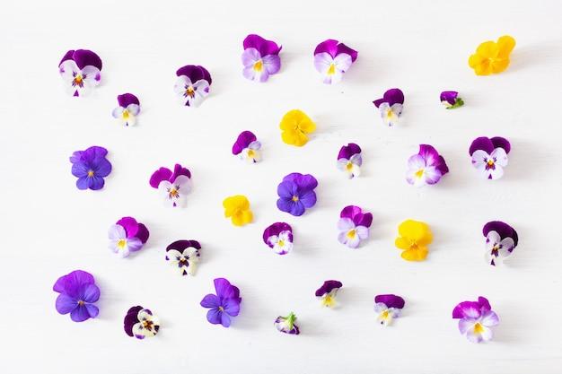 Mooie viooltje zomerbloemen flatlay op wit