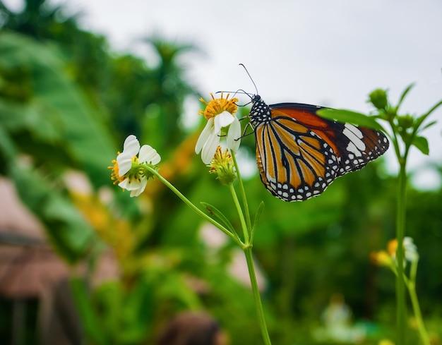 Mooie vlinder die een zoete bloem in de tuin drinkt