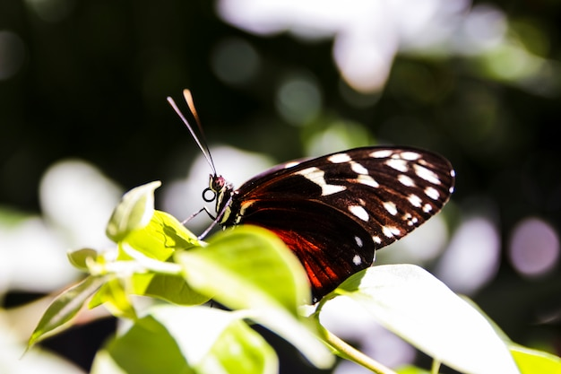 Mooie vlinder die op groen blad in de tuin wordt neergestreken