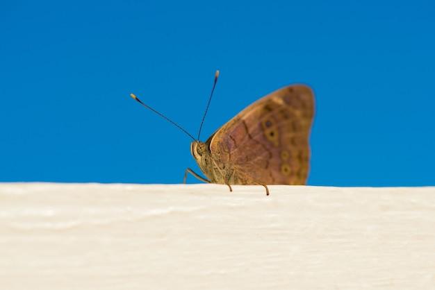 Mooie vlinder die zit. foto genomen op het strand in de dominicaanse republiek.