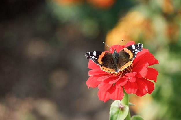 Mooie vlinder zit op een rode bloem in de natuur. hoge kwaliteit foto