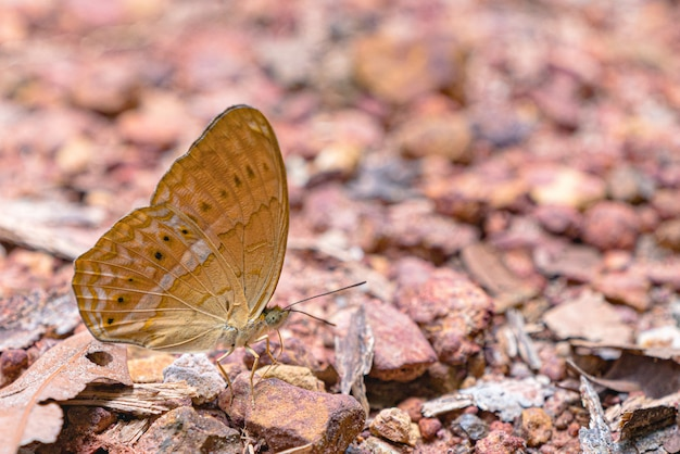 Mooie vlinders kom mineralen eten