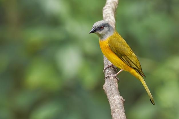 Mooie vogel die op een droge boom rust