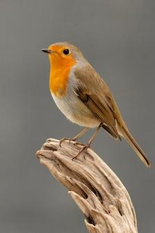 Mooie vogel met een mooi rood verenkleed
