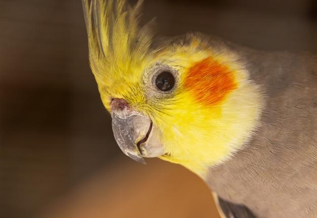 Mooie vogels gevangen op een boom in het natuurlijke bos