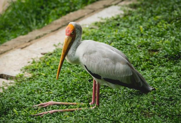 Mooie vogels in tropische dierentuin.