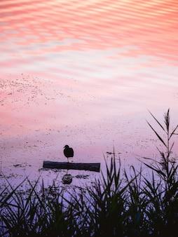 Mooie vogeltjes staan op een been. de meervogel rust 's avonds op één been