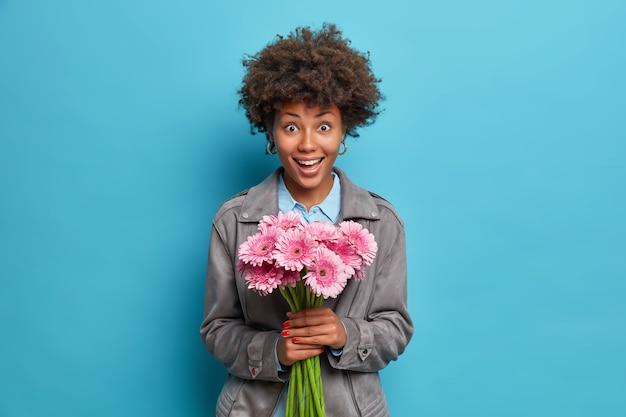 Mooie vrolijke vrouw met afro haar houdt gerberabloemen gekleed in grijs jasje geïsoleerd over blauwe muur