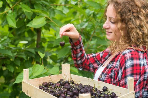 Mooie vrouw die geniet van het oppakken van kersen in een groene boomgaard