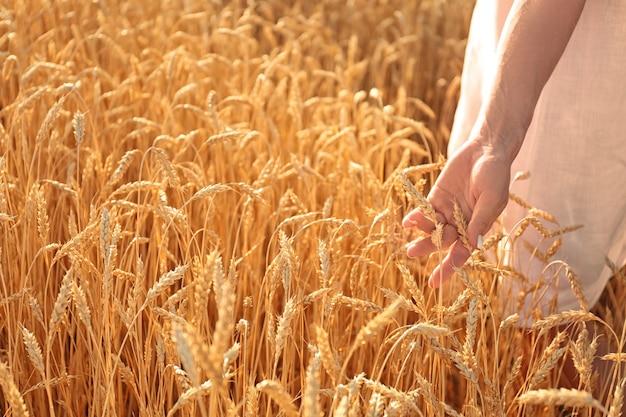 Mooie vrouw die tarweaartjes in het veld aanraakt op zonnige dag