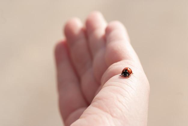 Mooie vrouwelijke hand met een lieveheersbeestje. macrofoto. lieveheersbeestje op de hand.