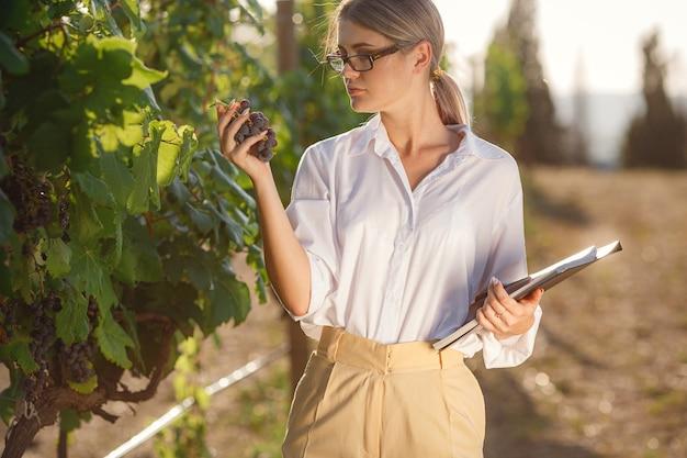 Mooie vrouwensommelier controleert druiven vóór oogst. vrouw met cluster van rijpe druiven in wijngaard, close-up