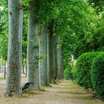 Mooie wandeling door het openbare park met grote bomen en banken om uit te rusten?