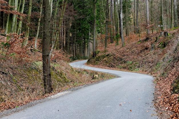 Mooie weg die in het najaar door het bos buigt.