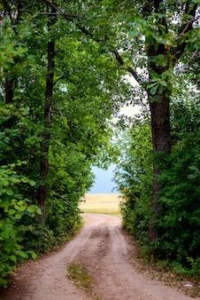 Mooie weg, die uit het bos komt in het veld, frame van groene bomen