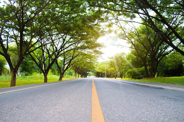 Mooie wegen met groene bomen langs de route op zonnige lentedag.