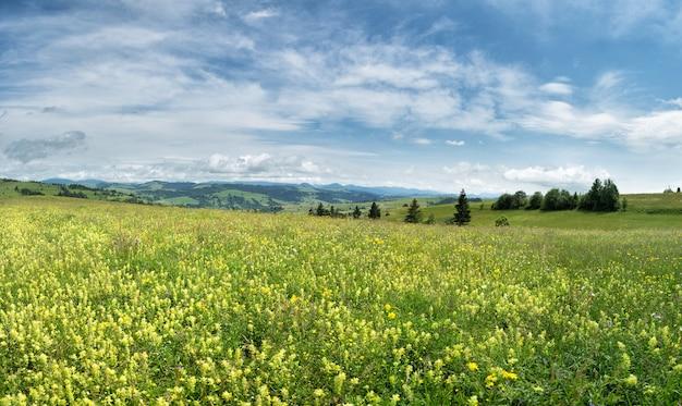 Mooie weide veld met wilde bloemen tegen bergen met wolken.