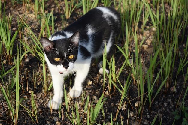 Mooie wild kitten zwart witte lokale kat gaat liggen in de tuin
