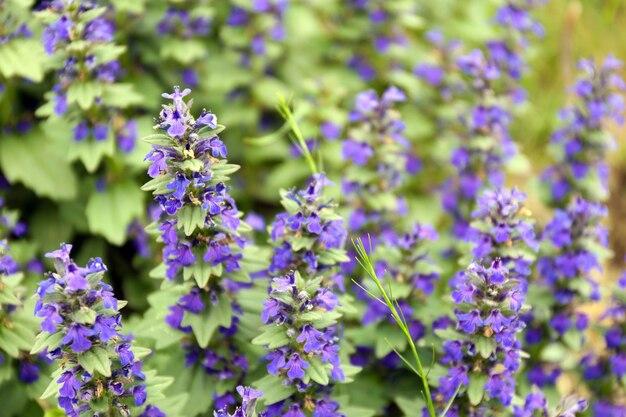Mooie wilde bloemen, buitenshuis