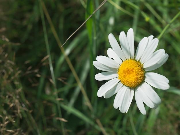 Mooie wilde bloemen close-up op natuurlijke groene achtergrond