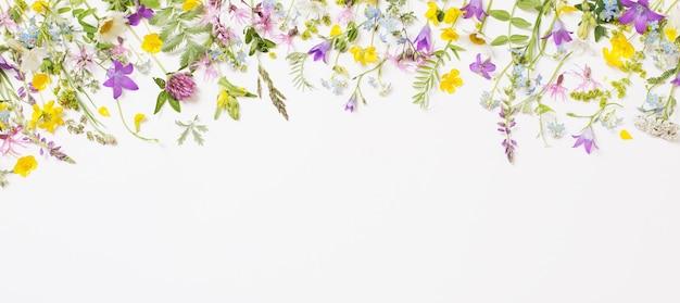 Mooie wilde bloemen op witte achtergrond