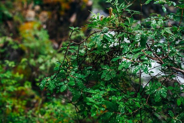 Mooie wilde flora in donker bos.