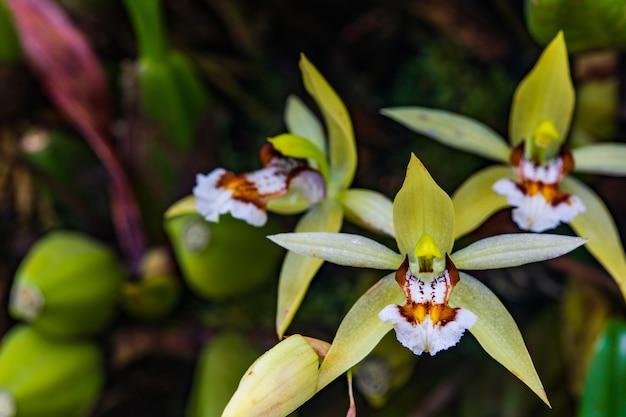 Mooie wilde orchidee in tropisch bos.