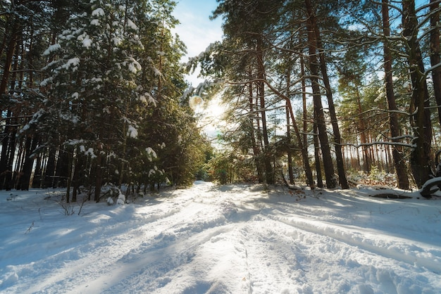 Mooie winter besneeuwde bos op een zonnige dag.