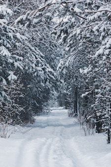 Mooie winter weg in het bos