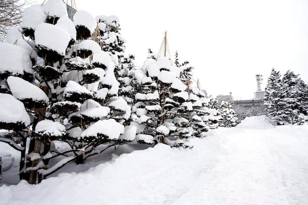 Mooie, wintersneeuw in sapporo, hokkaido, japan