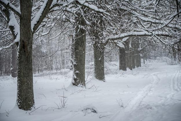 Mooie wintersteeg. park bomen bedekt met sneeuw. een pad tussen bomen bedekt met sneeuw