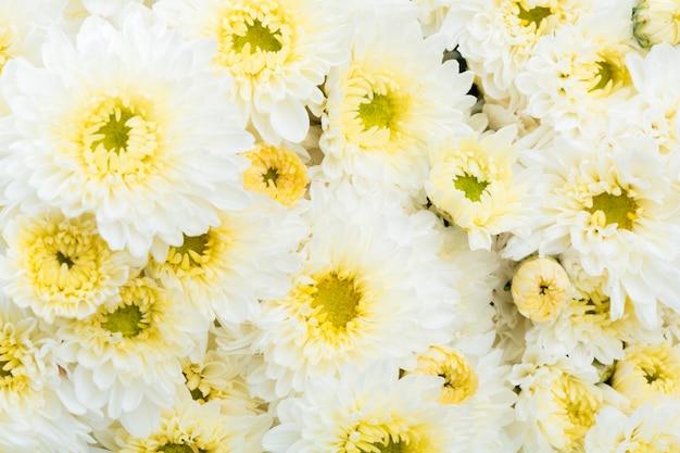 Mooie witte bloem