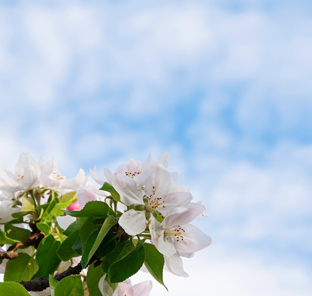 Mooie witte bloemen op blauwe hemel