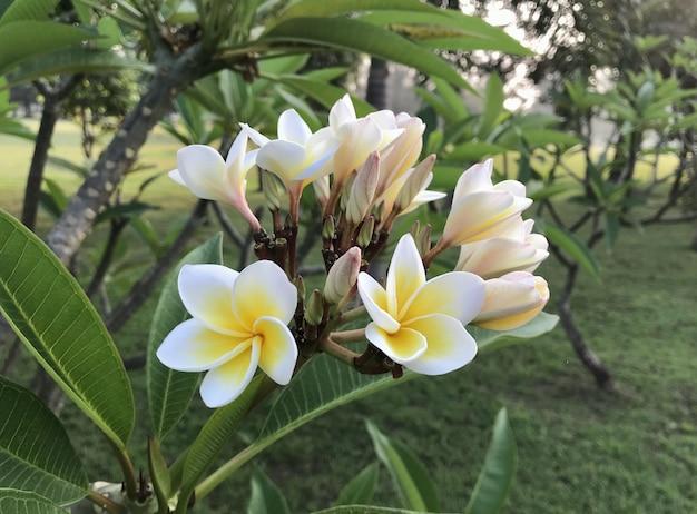 Mooie witte bloemen
