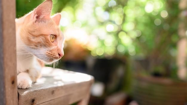 Mooie witte en bruine kat met zonsondergang licht bokeh en lens flare achtergrond. schattig huisdier ontspannen in de tuin.