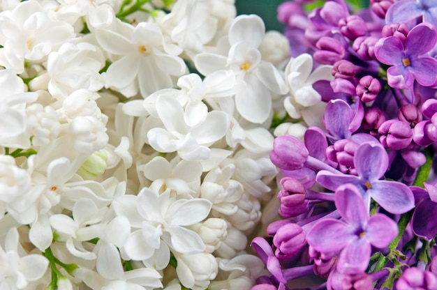 Mooie witte en violette lila achtergrond
