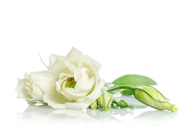 Mooie witte eustomabloemen die op witte achtergrond worden geïsoleerd