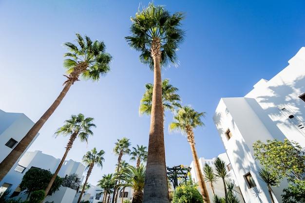 Mooie witte huizen aan de tropische tuin met palmen.