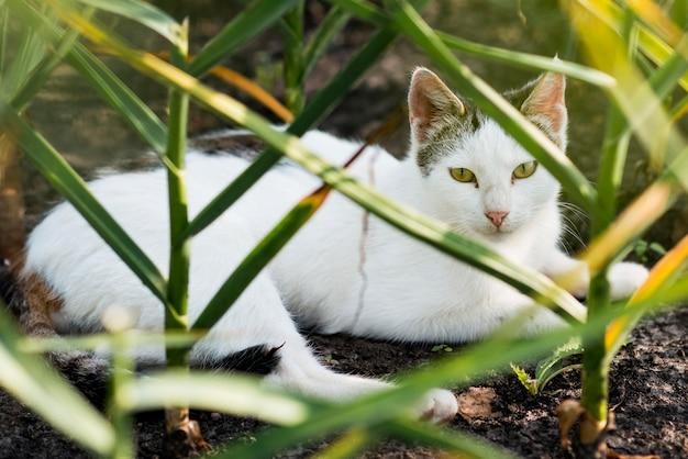 Mooie witte kat die op de grond legt