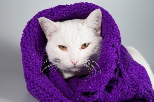 Mooie witte kat gewikkeld in een gebreide sjaal