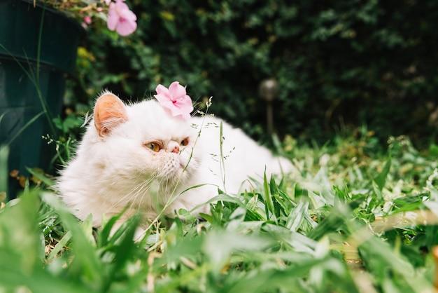 Mooie witte kat in de natuur